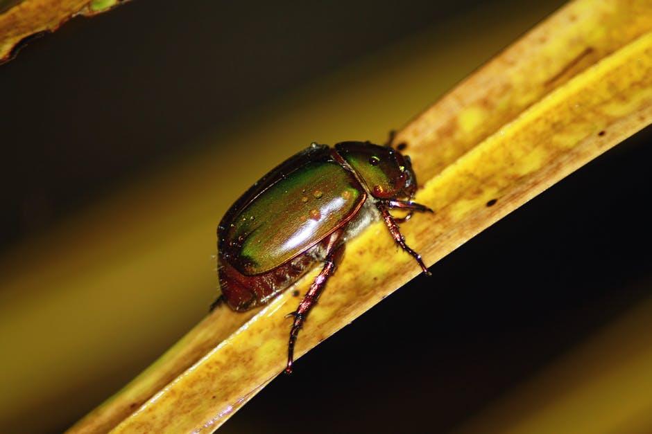 مكافحة حشرات بالرياض ورش ميبدات