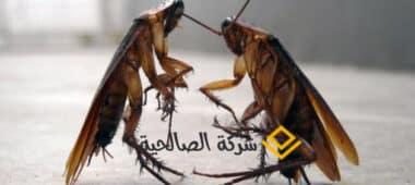 تخلص من الحشرات باسرع الطرق