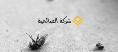 طرق سهلة للقضاء علي الحشرات نهائيا