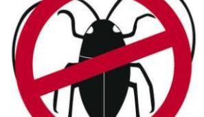 نصائح لمكافحة الحشرات